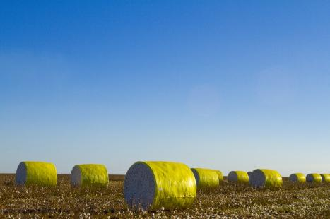 Baixa oferta e estoques limitados dos EUA impulsionam preços do algodão