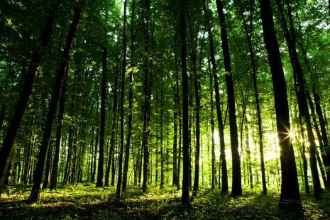Cresce vegetação protegida dentro das propriedades rurais agrícolas