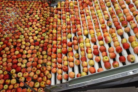 Com exportações em queda, preços da maçã sobem no mercado interno