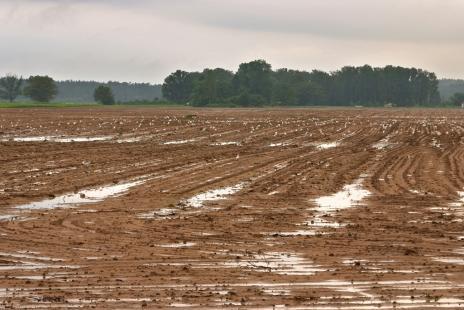 Milho e feijão estão entre as lavouras mais prejudicadas por conta da chuva em SC