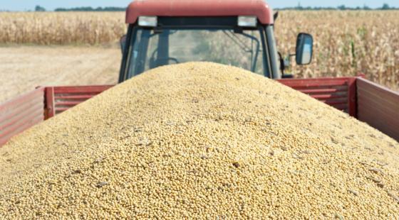 Disputa comercial entre China e EUA pode favorecer comércio brasileiro de soja