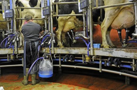 União entre produtores e indústria pode fazer pecuária leiteira sair da crise