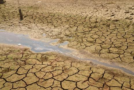 Seca causou prejuízo de US$ 13 bilhões para a agropecuária entre 2005 e 2015