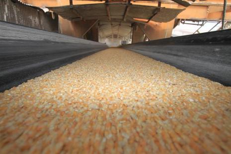 Embarques de milho têm aumento de 105% em agosto