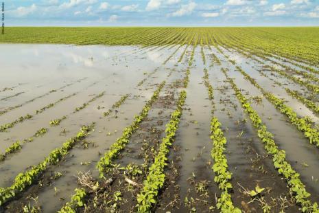 Chuvas alagaram lavouras de soja na Argentina