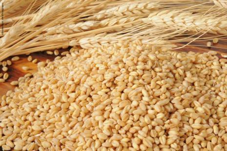 Setor do trigo vai ampliar esforço de esclarecimento sobre o glúten