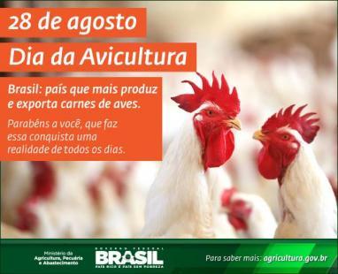 Resultado de imagem para dia da avicultura