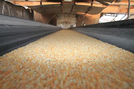 Exportações de milho têm forte elevação em julho (Foto: Appa)