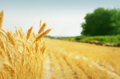 Itens agropecuários, como cerais, registraram queda de preço neste ano