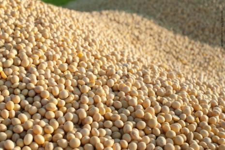 Produtividade baixa afetou desempenho da colheita de grãos