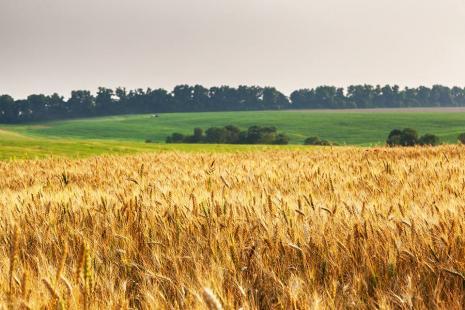 Incentivo à produção de trigo pode baratear farinha